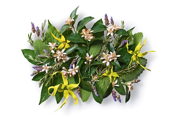 AVEDA bloemen geuren